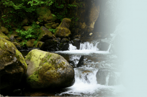 A gently cascading brook rushes past moss-covered rocks.
