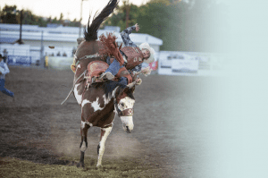 A rodeo cowboy rides a bucking horse at the Prineville Crooked River Roundup.