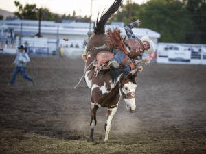 Photo of a bucking bronco sending a cowboy off the reigns.